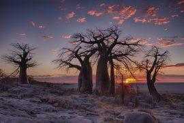 visitare il botswana